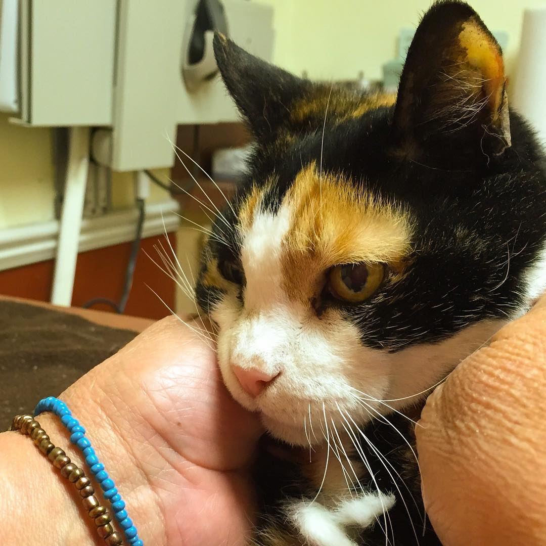 Patches, goodnight sweet girl.