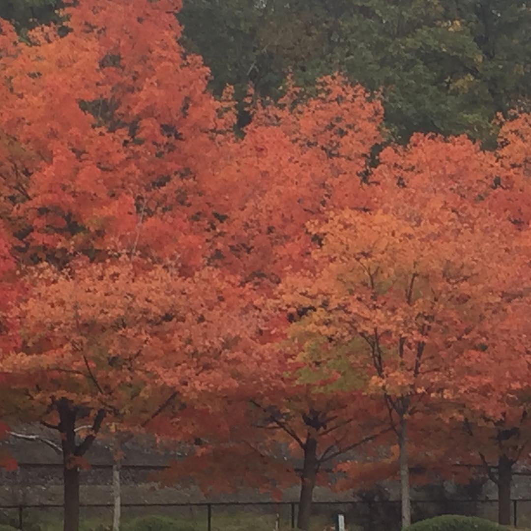 proper fall foliage