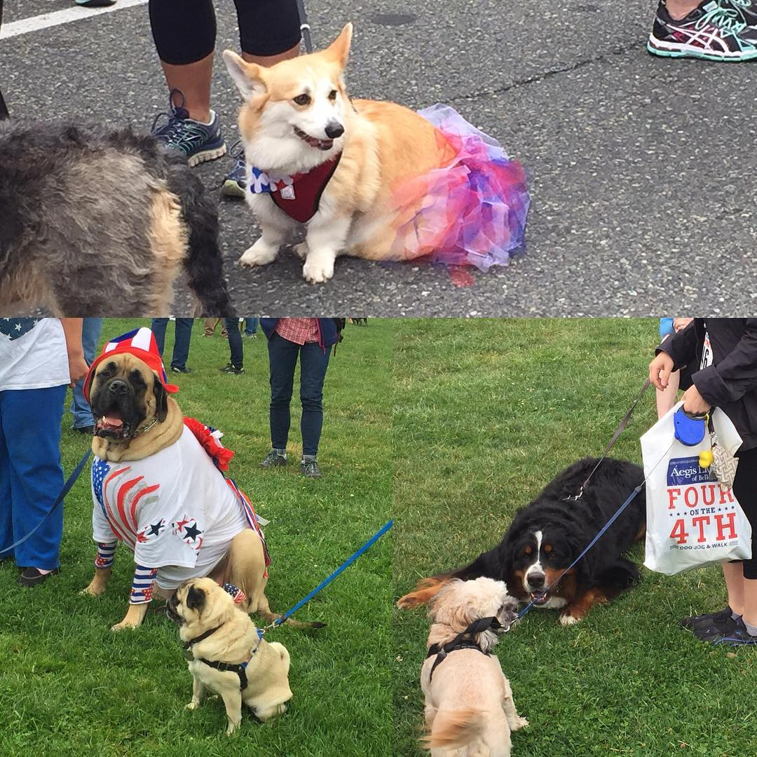 Lots of furry babies out and dressed up.