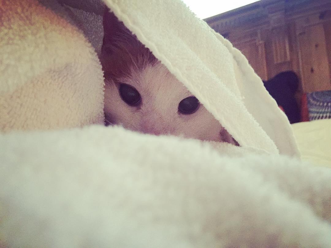 I spy something furry