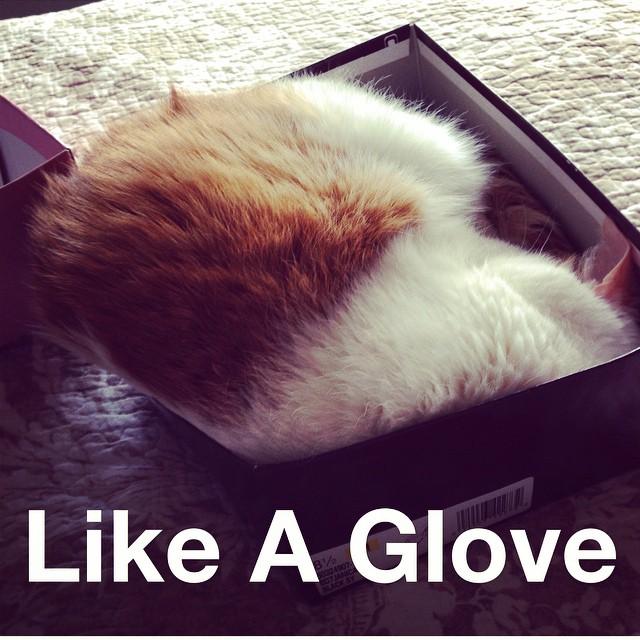 Like a glove!